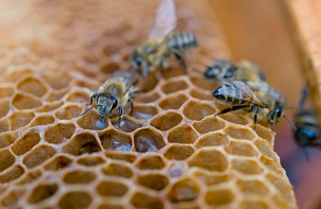 Bees and their benefits from Addi Naturals